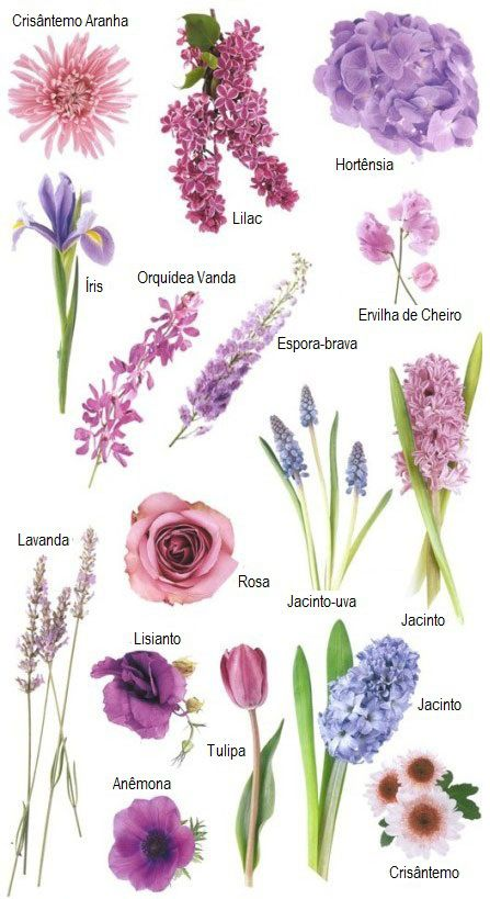 significado flor hortênsia azul